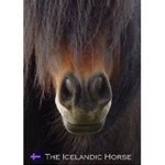 "DVD ""The Icelandic Horse"""